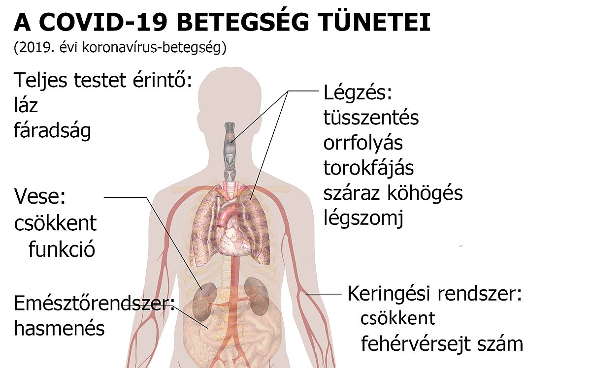 típusú tüdők a tüdőben