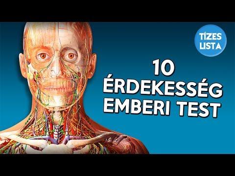 Bélférgesség tünetei és kezelése, Milyen nagy férgek vannak az emberi testben?