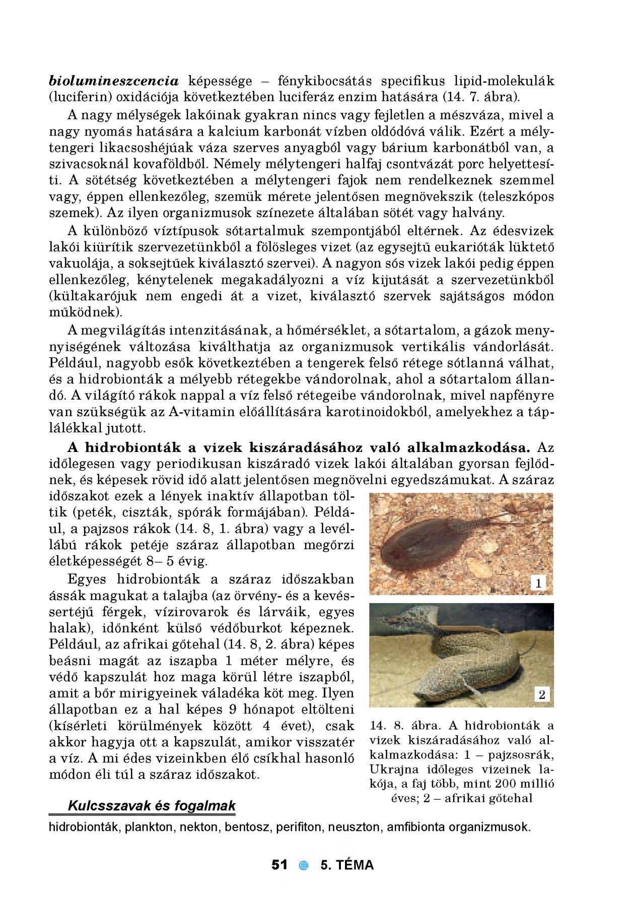 törpe szalagféreg szegmense a paraziták megelőzése és kezelése
