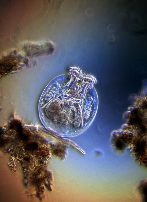 Baktériumok a csapvízben
