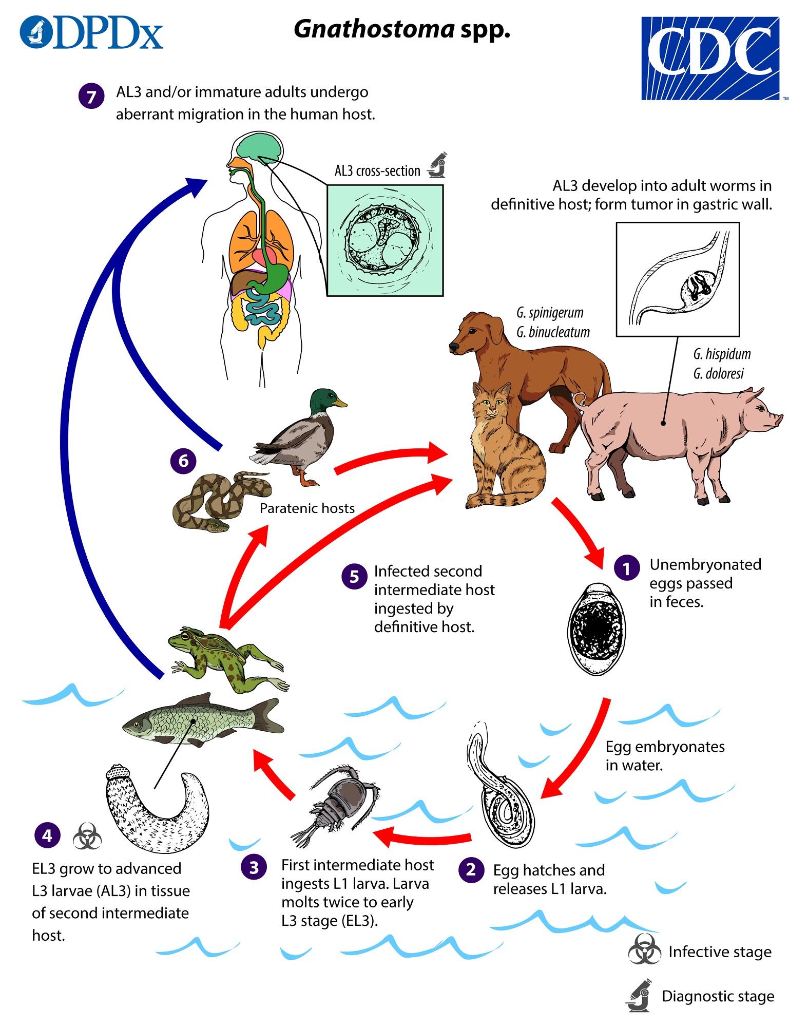 nuxen parazita kezelés gyógymod férgek es paraziták ellen