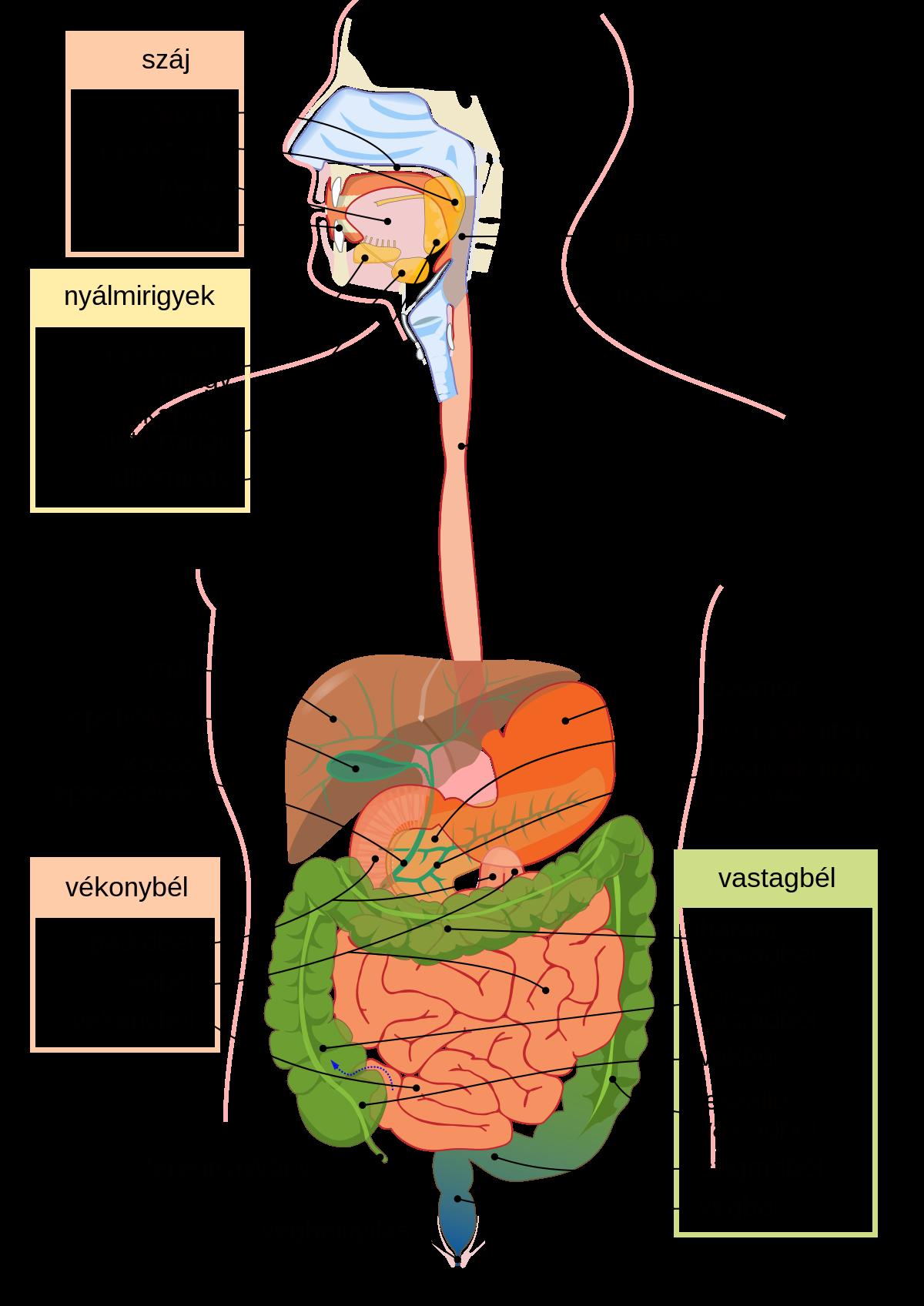 a férgek fajtái az emberi testben, szerepe a parazitákból származó taiga teáról