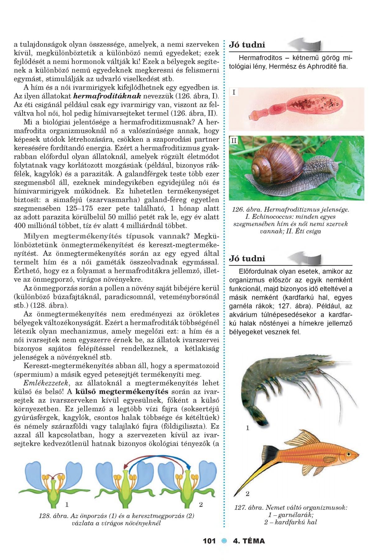 a paraziták nem heterotrófok