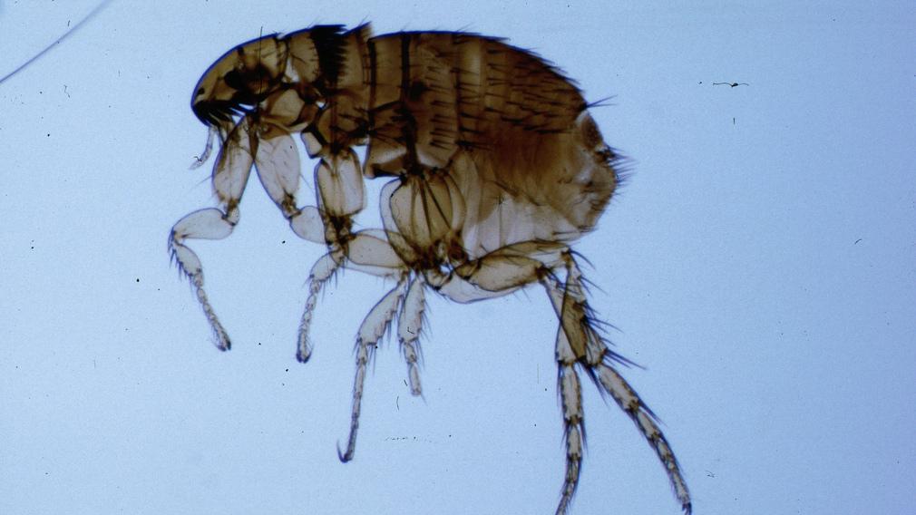 Parazitológia és parazita ökológia – Állatorvostudományi Egyetem