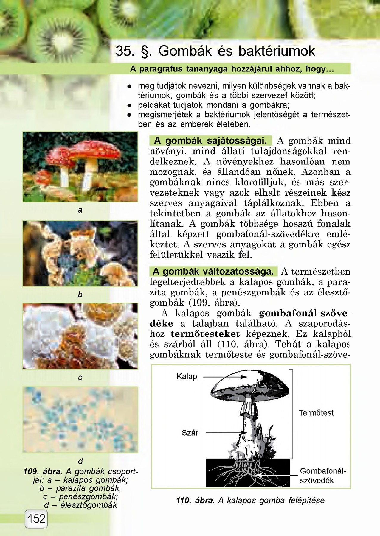 A gombás betegségek kezelése