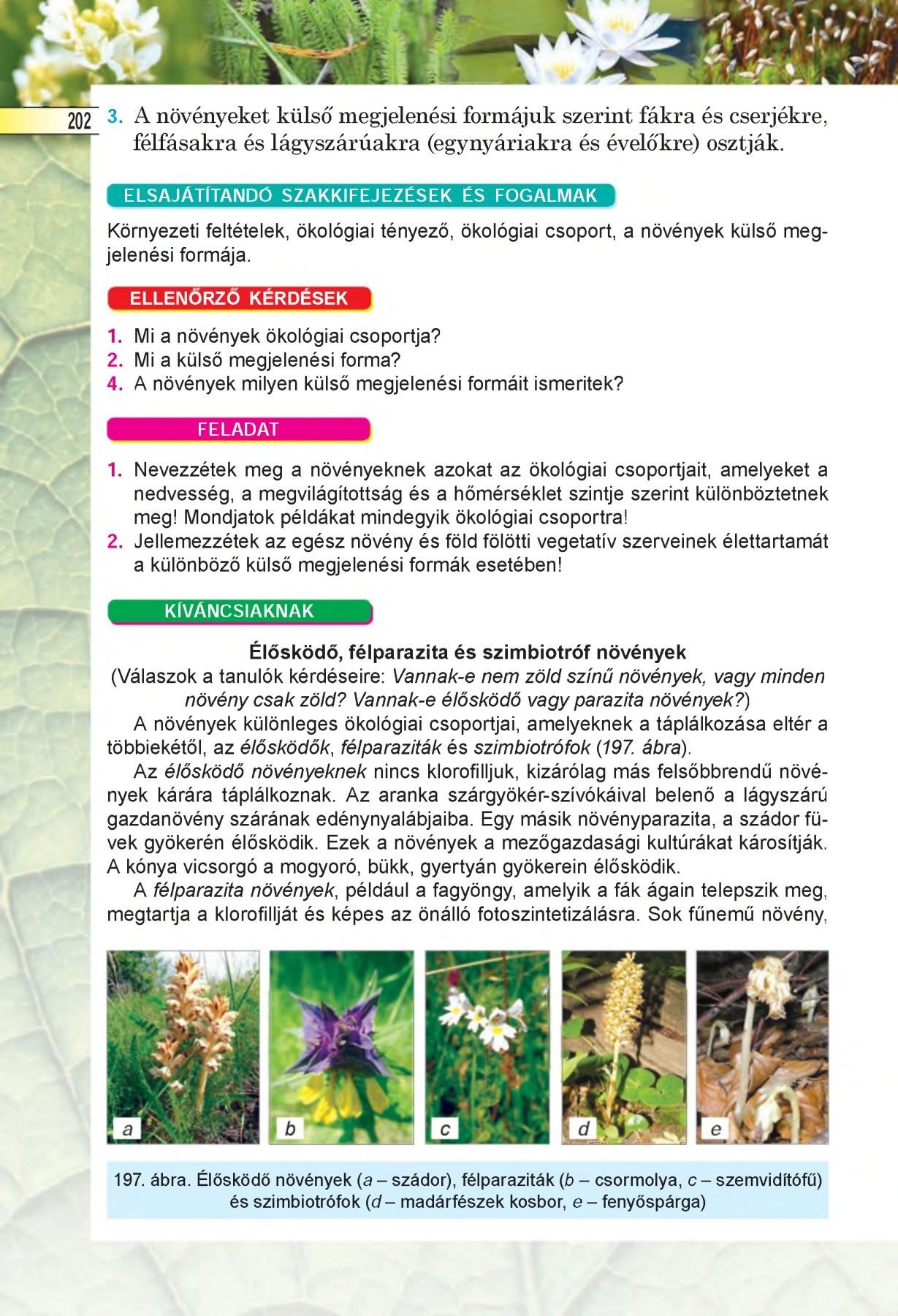 gomba parazita a növényi növényekben