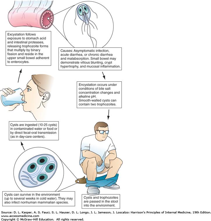 Chronic giardia symptoms in humans. Rizs Giardia-ból