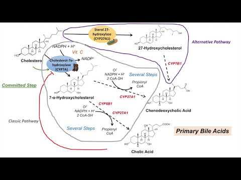 Choleretic készítmények parazitákhoz. Choleretic drogok: leírás és besorolás - Étrend