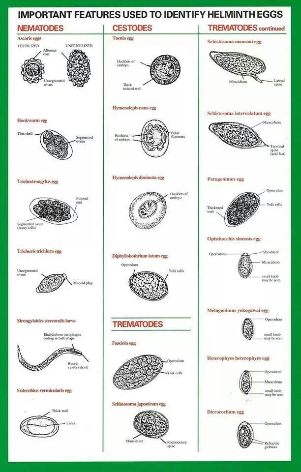 helminth tudomány