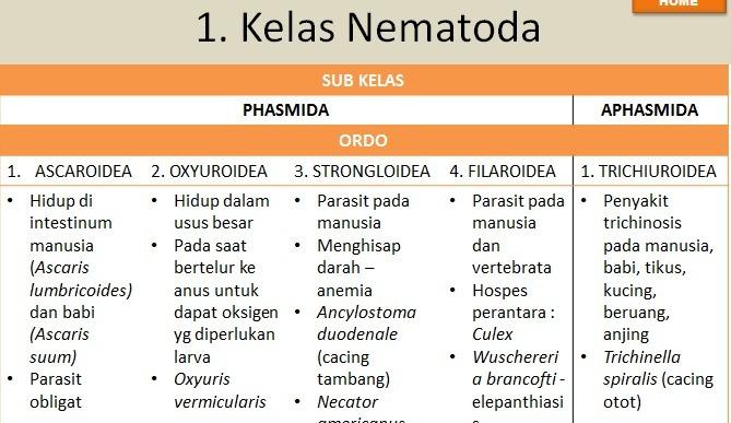 filum nemathelminthes kelas nematoda