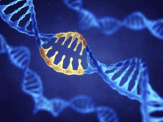 nyaki platyhelminthes test szimmetria paraziták kezelése hidrogén peroxiddal