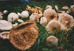 gombák penészgomba paraziták