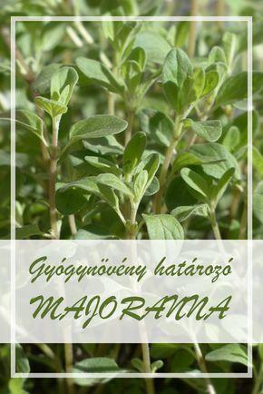gyógynövény és a gyógyszer neve